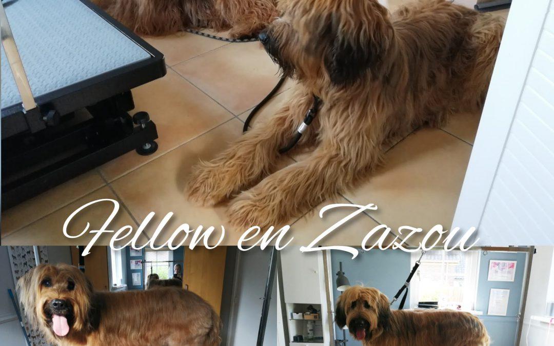 Fellow en Zazou
