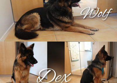 Dex & Wolf